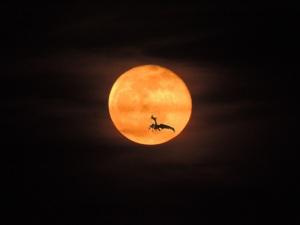 orange moon, no touchups.and dragonJPG