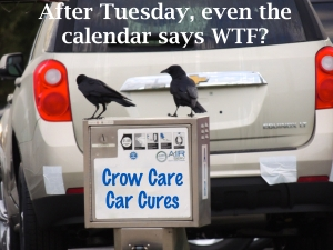 Crow Care Car Cures 2