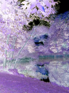 inverted colors of pond