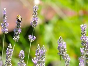 bee eighth