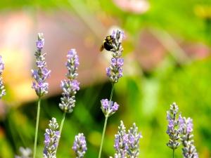 bee seventh