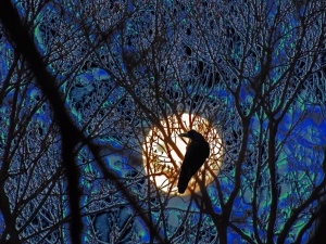 moon and crow with sky colors