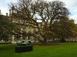 tree at trinity college, dublin