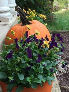 pumpkin and pansies