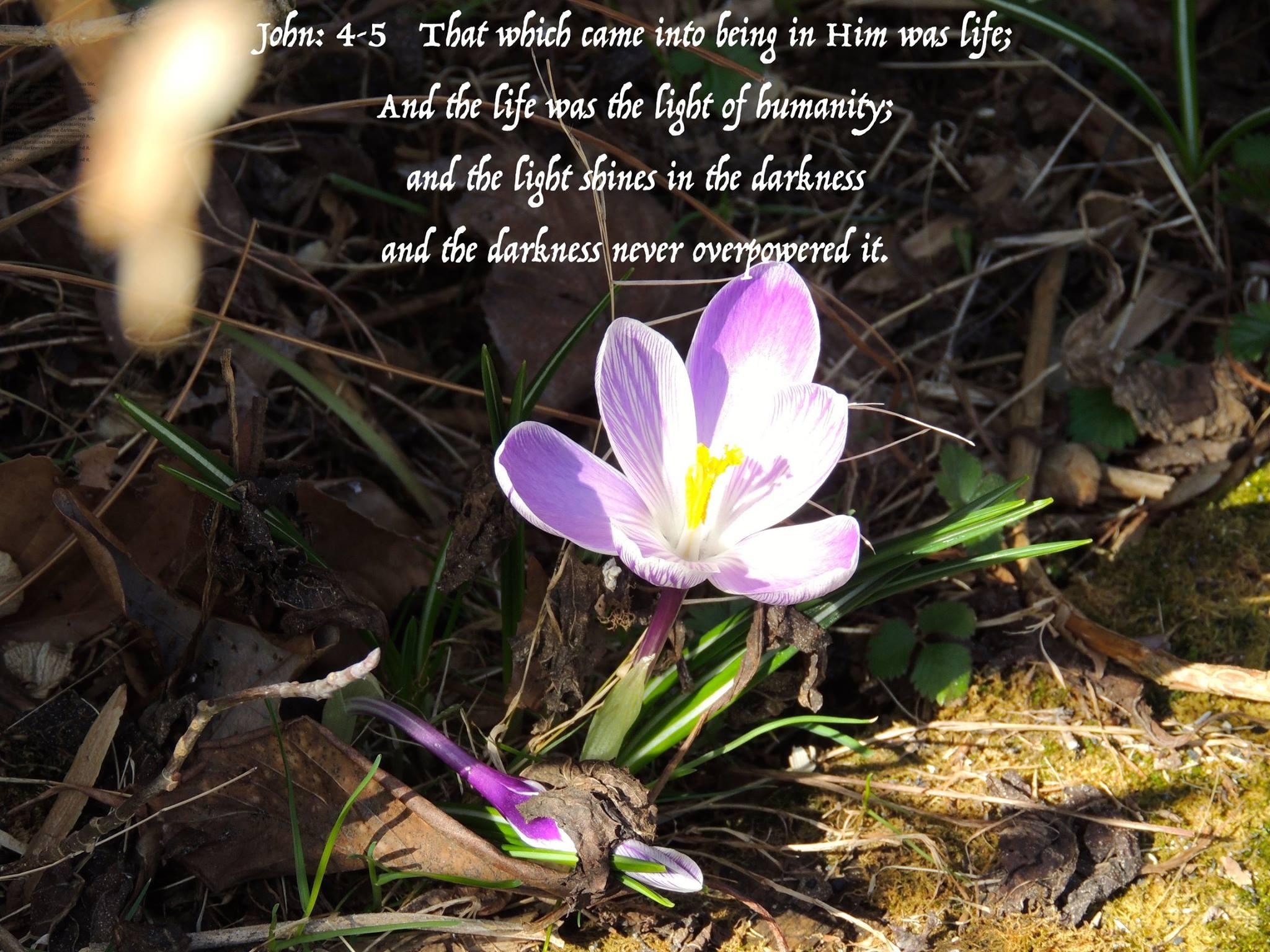 John 4,5